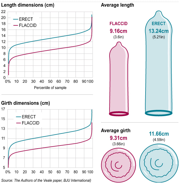 Average Thickness Of A Penis 47