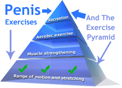 The excercises penis enhance size to